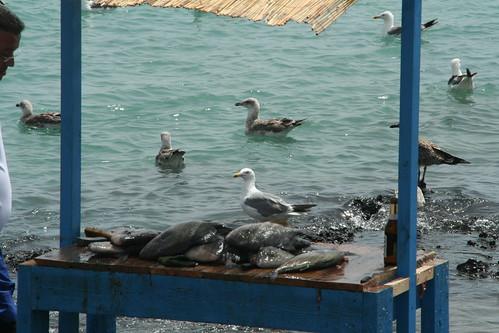 Ambiente pescador