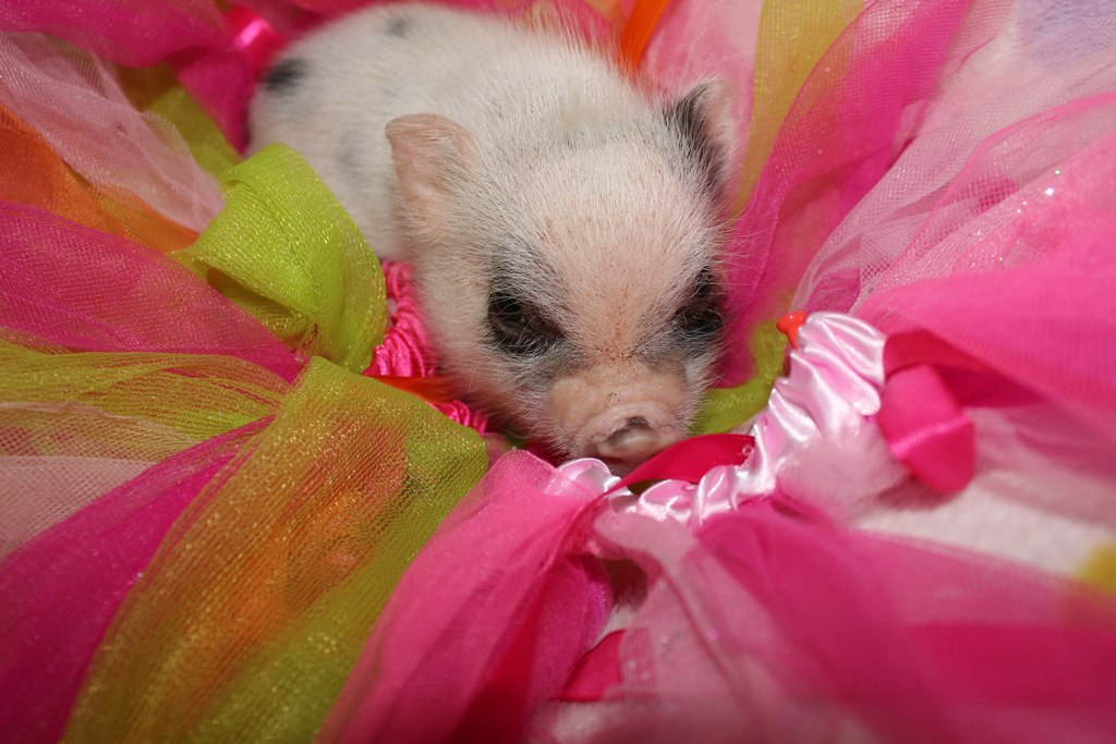 WMPF'S Tiny girl