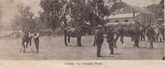 Judging draught stock Willunga Show, 1906.