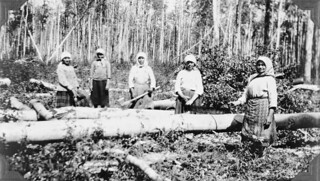 Ukrainian women cutting logs, Athabasca, Alberta / Ukrainiennes coupant des rondins, Athabasca (Alberta)