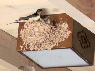 Ghost Ranch Barn Swallow 20100619 | by Kenneth Cole Schneider