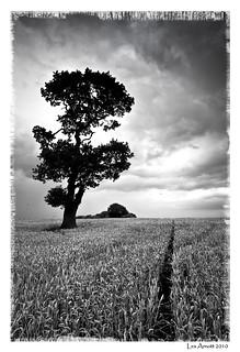 A Tree Near Rugeley mono