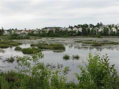 Belchers Marsh