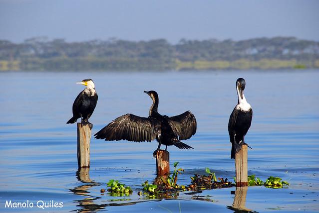 Lago Naivasha 249
