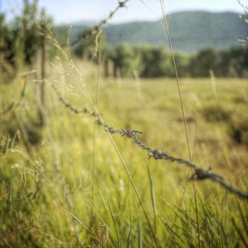 field rural fence square colorado dof farm dry grasses hayfield chatfield barbwire caono denverbotanicgardensfarm texturesquared t1i fencefriday fencedfriday
