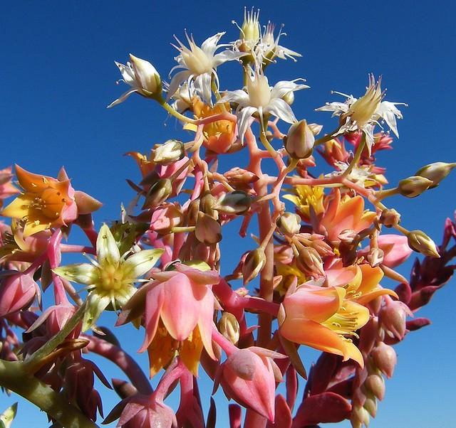 bouquet de succulentes