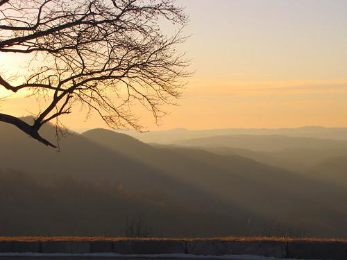 sunrise landscape northcarolina liriodendrontulipifera landschaft blueridgeparkway tulippoplar tuliptree liriodendron westernnorthcarolina wataugacounty southernappalachians ccbyncsa grandviewoverlook canonpowershotsx10is