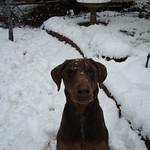 Akai in the Snow 2 2010-02-11