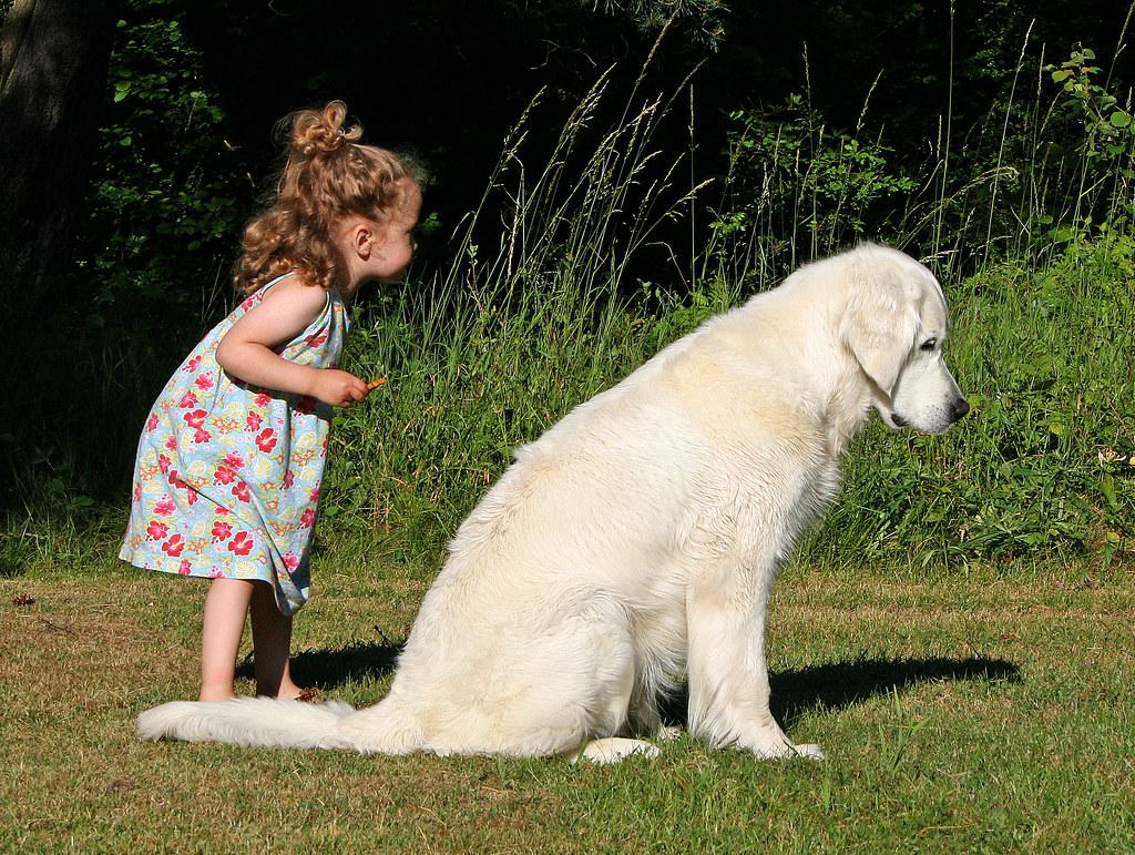 658bfc455 10 Melhores raças de cães para famílias com crianças (separamos as opções  menos óbvias)
