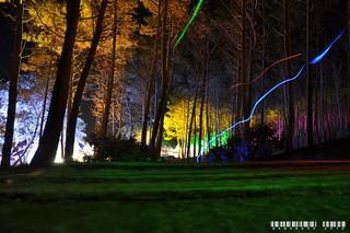 Forêt festive