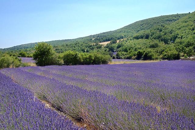Tapis - Lardiers (Alpes-de-Haute-Provence)