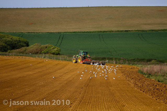 When the seagulls follow the tractor. Bastardised Farming idioms #3
