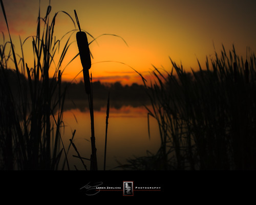 morning autumn light shadow sky orange plants lake black reflection fall nature water grass silhouette wisconsin clouds sunrise reeds photography gold dawn early photo still pond october midwest image horizon picture hills marsh 2008 canonef1740mmf4lusm goldenhour cattail fitchburg canoneos5d danecounty lorenzemlicka