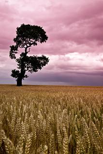 A Tree Near Rugeley