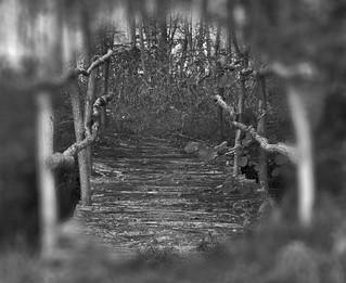 Soñei nunha ponte..... | by amaianos