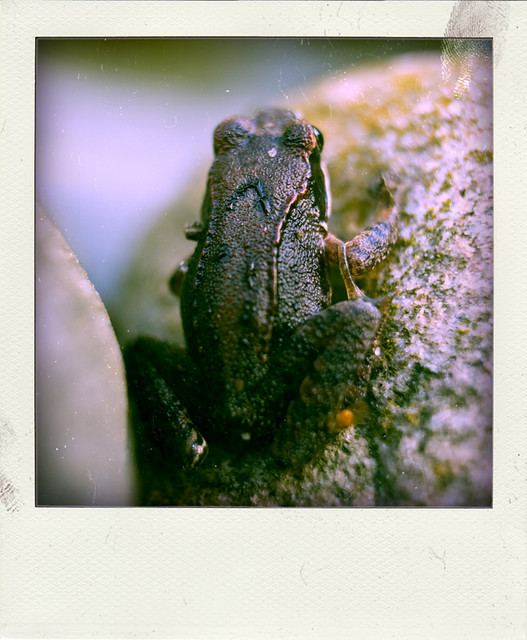 248/365: Frog