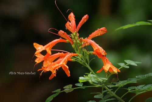Favoritas de los colibríes