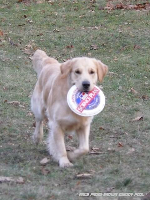 2009_12_05 - dogfreesbee před barákem