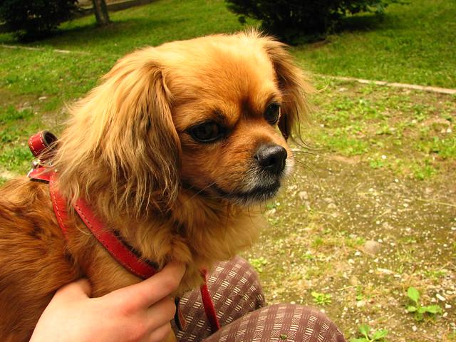 Sweet dog Puffy