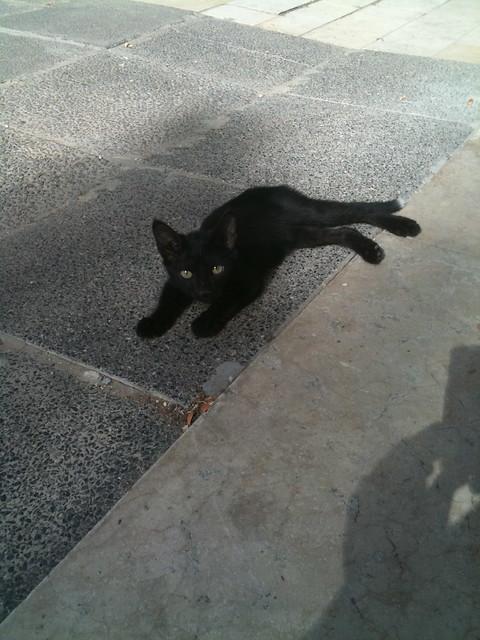 Tiny Cat returns!