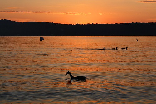park sunset orange lake bird water canon eos rebel soleil duck eau vermont state coucher lac aquatic oiseau canard xsi carmi shutterbugs