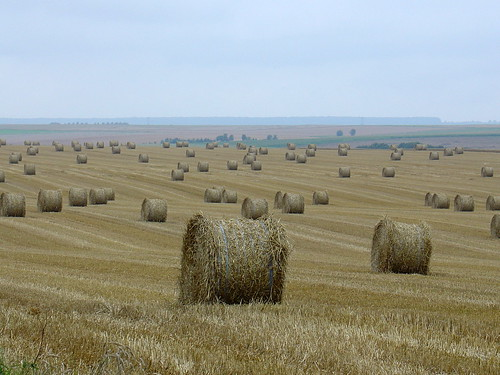 August: hay time