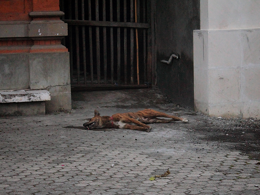 Sterbender Hund