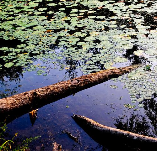 sunset summer lake nature reflections landscape evening pond dusk upstatenewyork lilypads treestumps beautyinnature southnewberlinnewyork huntspondstatepark
