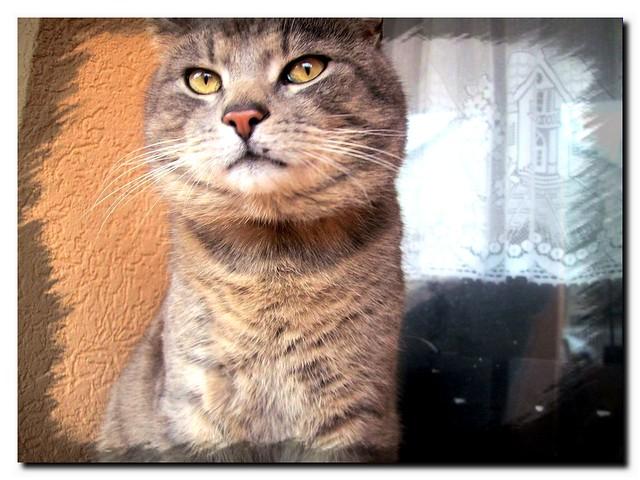 Our philosopher cat - A mi filozófus cicánk