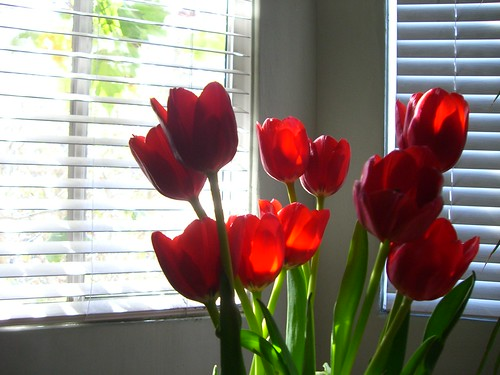 Tulips. | by A National Acrobat