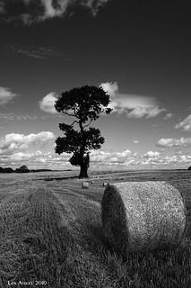 Ria's Tree and Hay Bales (mono)