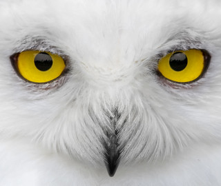 Look into my eyes.... | by Johan J.Ingles-Le Nobel