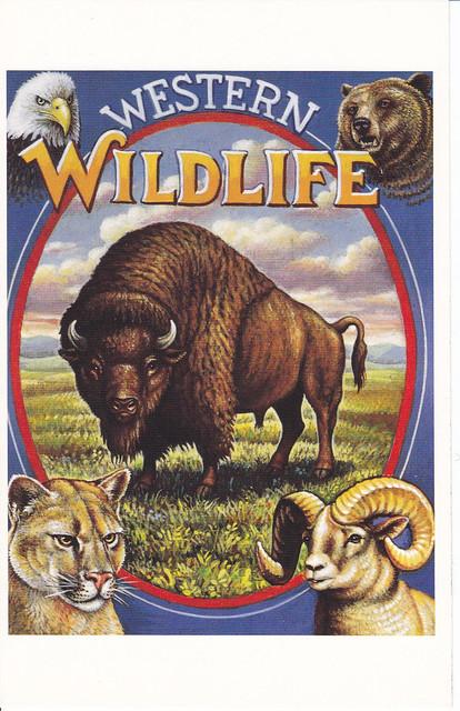 USPS Legends of the West Western Wildlife Postcard