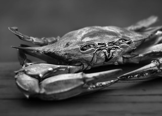 Stock Photograph of Still Life: Fish, Crab, Clams with a ... |Crab Still Life