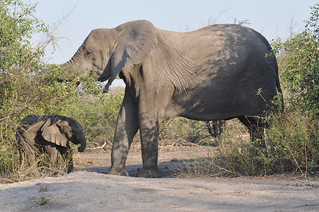 Botswana Day 7 061 | by Karmor