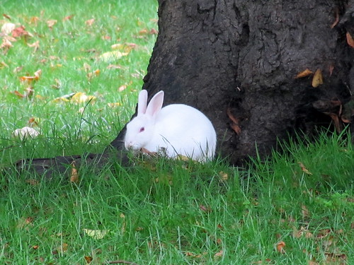 white rabbit | by Mostly Dans