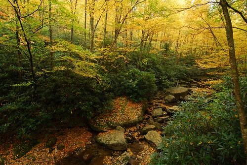 autumn trees yellow creek fallcolors grandfathermountain westernnorthcarolina booneforkcreek photocontestfall10