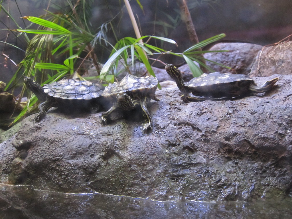 Shedd Aquarium | Photo from the Shedd Aquarium in Chicago ...