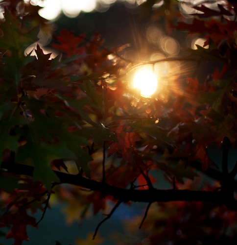 sun tree leaves sunrise leaf bokeh flare morningsun 50mmf18 canoneos50d