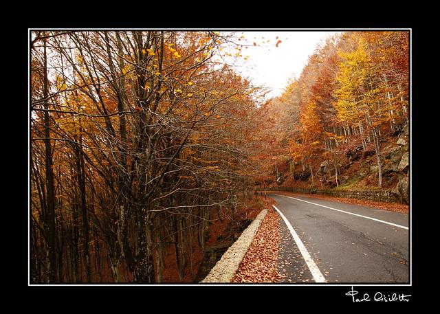 Colori in autunno (5)