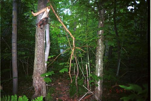 newyork error whitetaileddeer odocoileusvirginianus taxonomy:common=whitetaileddeer deerandantelope siwild:study=adirondackcarnivoresurvey siwild:studyId=adksets geo:locality=northamerica taxonomy:group=deerandantelope sequence:index=1 sequence:length=1 taxonomy:species=odocoileusvirginianus file:name=untitl~2jpg siwild:date=200107040547000 siwild:plot=gulfview siwild:location=gulc2 siwild:trigger=adkimg622 siwild:imageid=adkimg622 siwild:camDeploy=adkdeploy42 sequence:id=adkimg622 file:path=dpixgul2untitl~2jpg sequence:key=1 siwild:region=adk BR:batch=sla0620101118064407 siwild:species=138 geo:lon=4499749 geo:lat=73793168