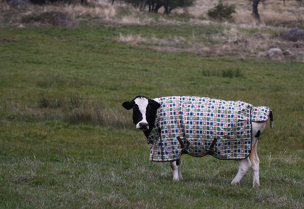 Sadie Showing off her New Coat