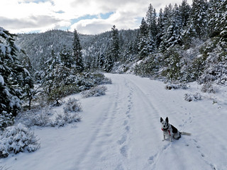 Snow Running With Ringo - Aspen Lake Road (The Gate Trail) | by ex_magician