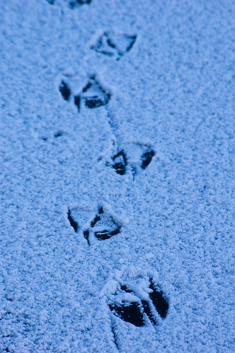 Goose footprints