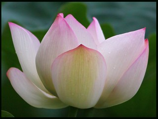 LOTUS | by Mixtribe Photo