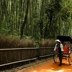竹の道-京都.For