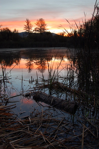 water oregon sunrise landscape pond cattails talent cottonwoods bearcreek roguevalley the4elements