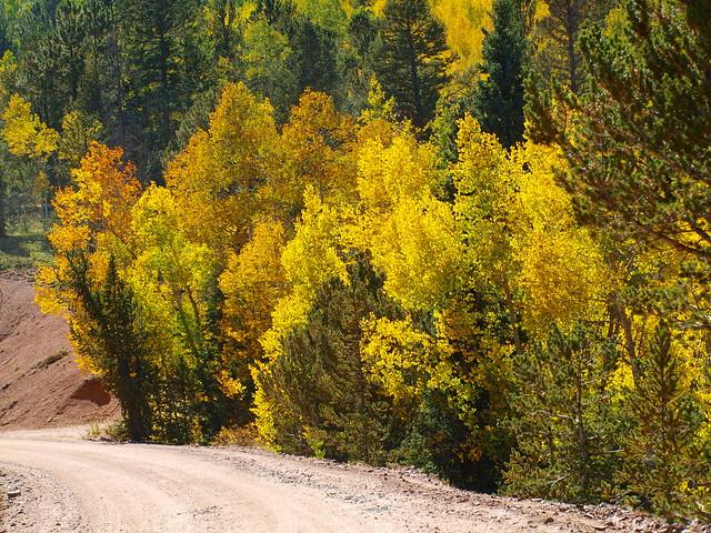 Gold Camp Road Aspens