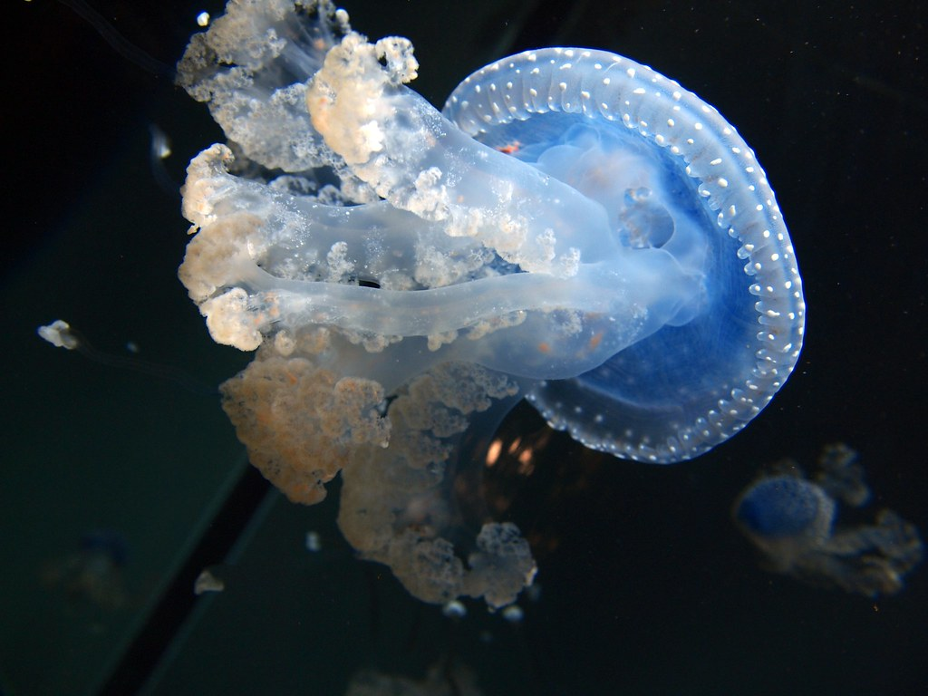 One of The Most Beautiful Sea Creatures | I think this is a