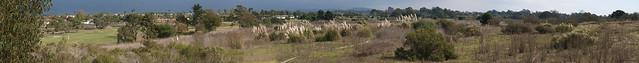 JB060002_20  101106 Goleta Ellwood Pampas grass field wider ICE p3 stitch PScs4 crop compr9 for Flickr